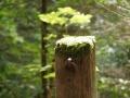 Österreich 2015 - Was macht man hier mitten im Wald fest?