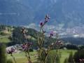 Österreich 2015 - Immer wieder schön