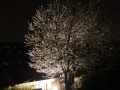 Blühender Baum bei Dunkelheit