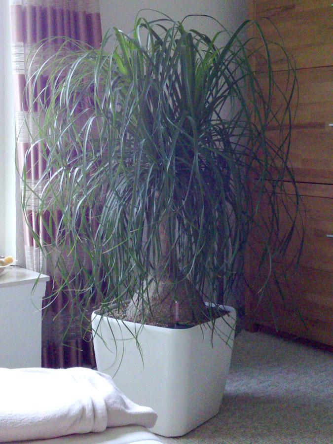 pflanzen lechuza seite 2 ankes und hgs blogin. Black Bedroom Furniture Sets. Home Design Ideas