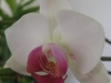 orchidee_02